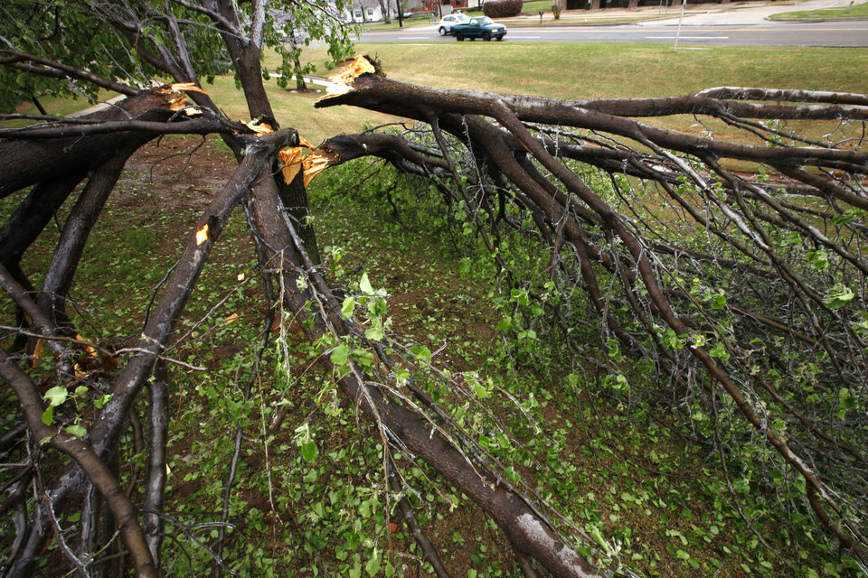 Right: Trees split open Wednesday after being weighed down with ice at S Ninth and Kelly in Edmond.