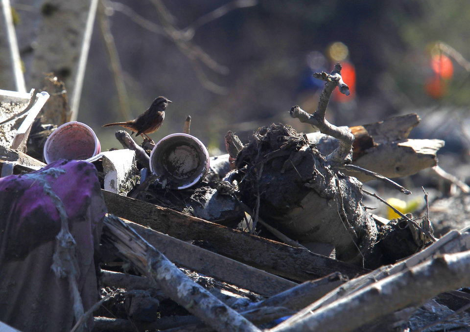Photo - A bird stands atop on debris at the site of March's fatal mudslide near Oso, Wash., on Tuesday, April 1, 2014. The March 22 mudslide destroyed a  rural mountainside community northeast of Seattle. (AP Photo/The Herald, Mark Mulligan) MANDATORY CREDIT.