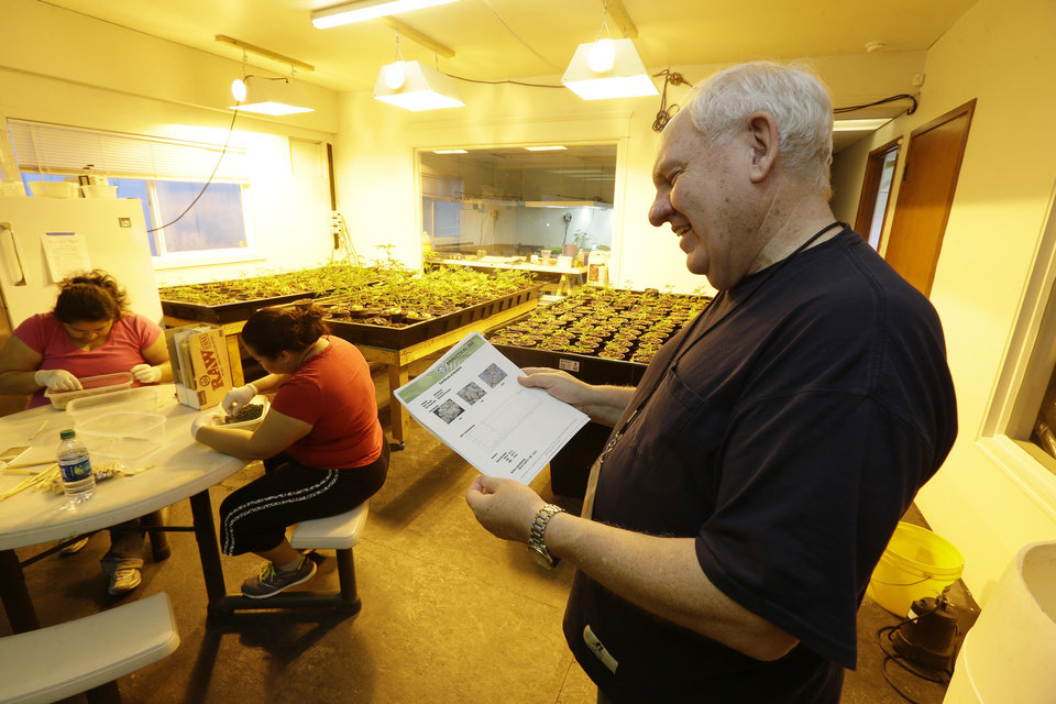 Photo - In this July 1, 2014, photo, Bob Leeds, owner of Sea of Green Farms, a recreational pot grower and processor in Seattle, smiles as he examines lab test results for one of his strains of marijuana in a room illuminated by yellow grow lights. Once pot is grown, dried, and processed, it must be tested by an authorized lab for levels of THC and other indicators before it can be sold in Washington state. (AP Photo/Ted S. Warren)