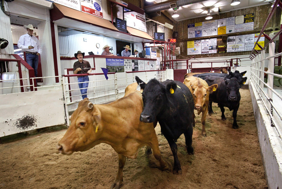 Photo -  Cows are paraded through the sale arena at the Woodward Livestock Auction. [Photo by Jim Beckel, The Oklahoman Archives]