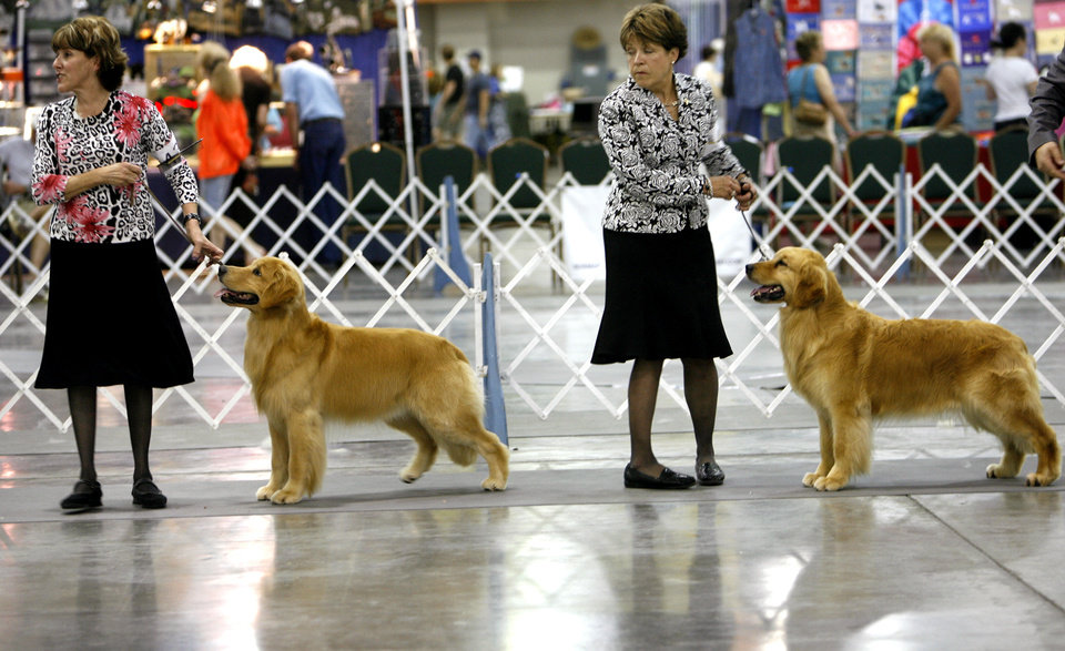 Professional handlers Sherri Hurst, left, and Susan Line, both from Houston, show their golden retrievers during the Oklahoma City Dog Show at the Cox Convention Center in Oklahoma City Thursday, June 25, 2009.  Photo by Ashley McKee, The Oklahoman