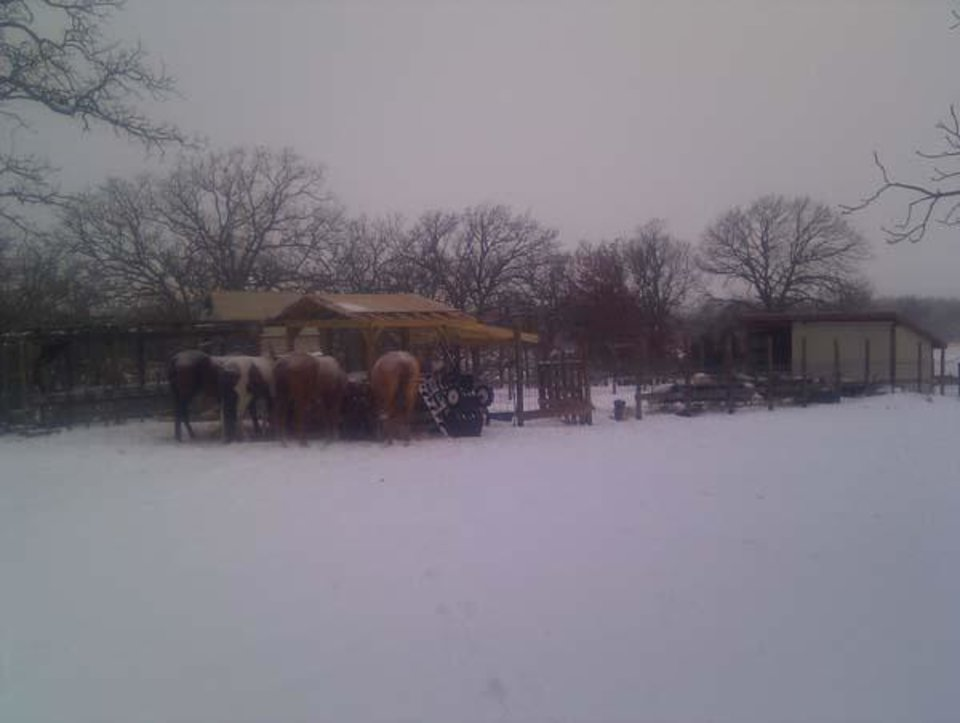 Photo - Horses in Holdenville