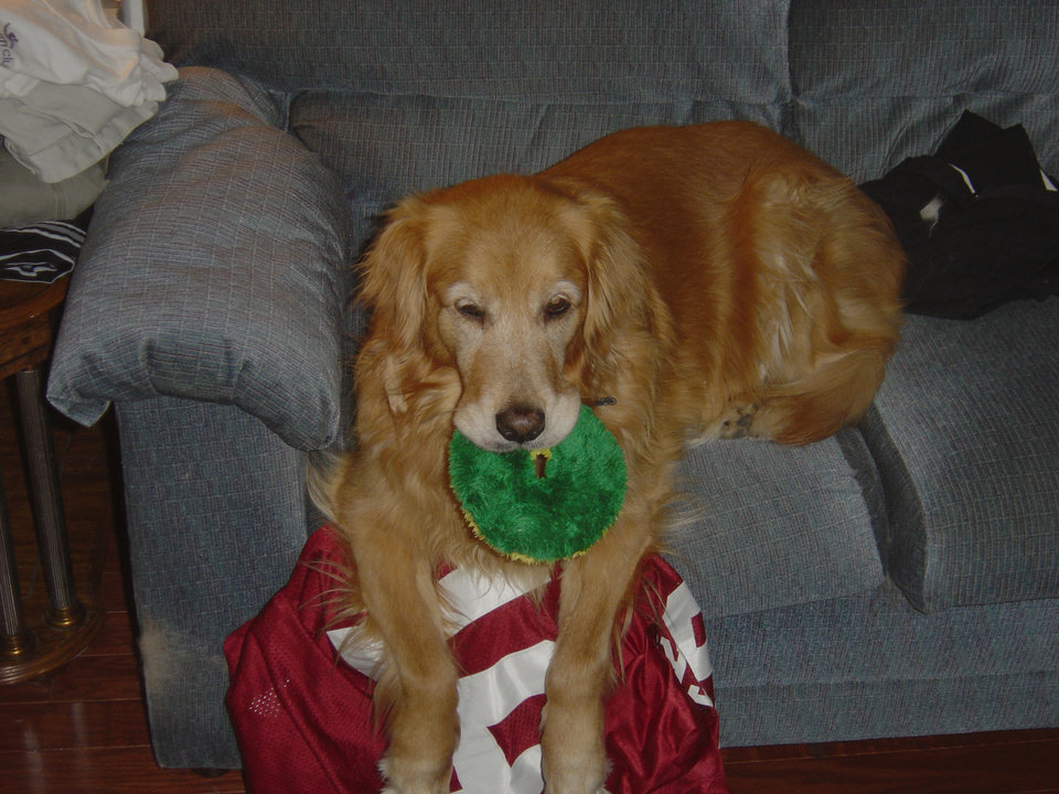 Baylee awoken from a nap with her toy laying on my OU jersey<br/><b>Community Photo By:</b> Dean Southern<br/><b>Submitted By:</b> Jenni, Bethany