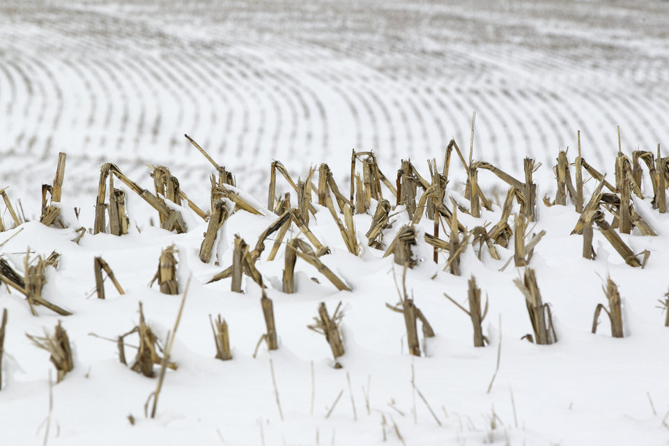 In this Dec. 28, 2012 photo, corn stalks stand in a snowy field near La Vista, Neb. Despite getting some big storms in December, much of the U.S. is still desperate for relief from the nation�s longest dry spell in decades. And experts say it will take an absurd amount of snow to ease the woes of farmers and ranchers. (AP Photo/Nati Harnik)