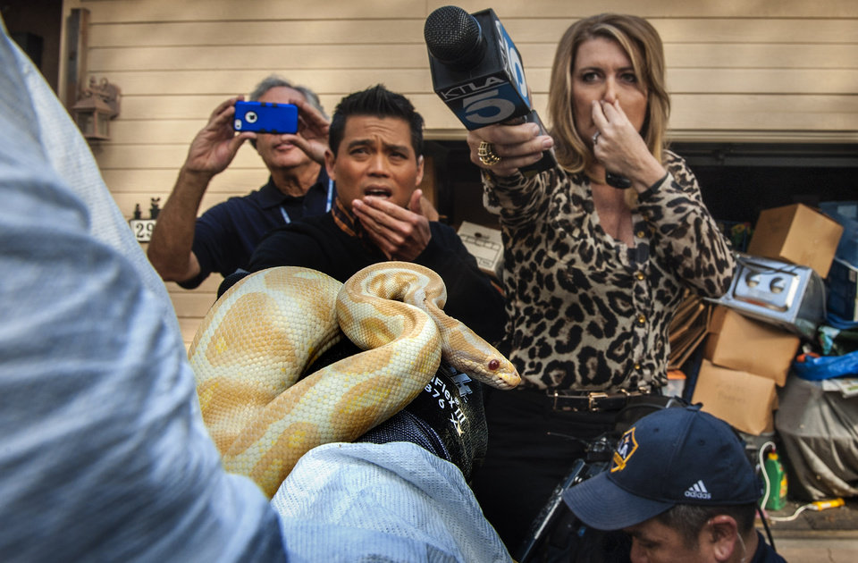 Photo - While interviewing  Sondra Berg, Santa Ana Police Animal Services supervisor, television reporters Bobby DeCastro, from FOX11, and Wendy Burch, of KTLA 5 plug their noses to avoid the stench emanating from the house with of dead and decaying snakes in Santa Ana, Calif. Berg holds an albino ball python that was one of the surviving snakes in the home.   (AP Photo/The Orange C ounty Register, Bruce Chambers)   MAGS OUT; LOS ANGELES TIMES OUT