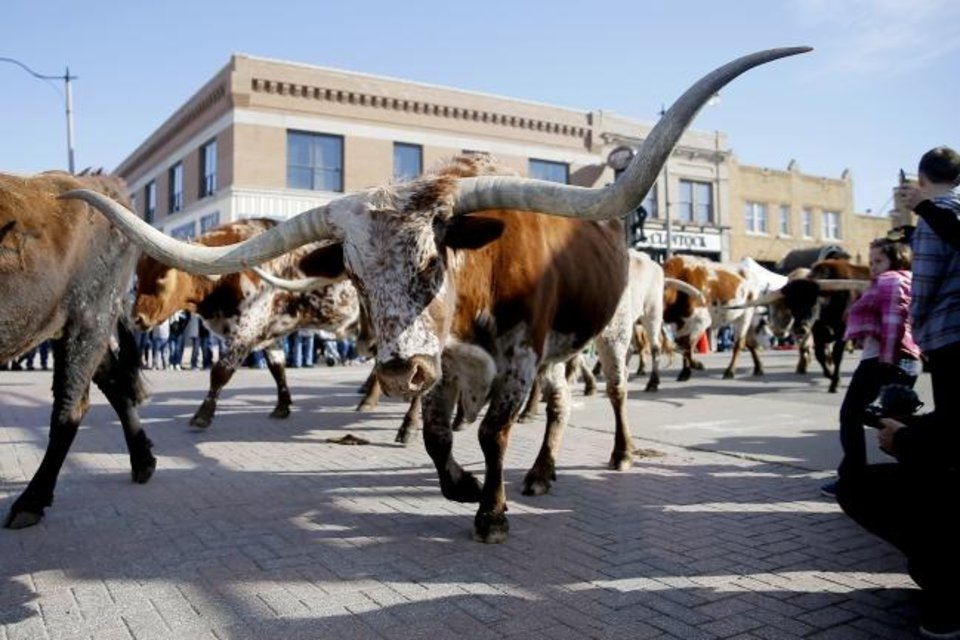Photo -  Longhorns from Chain Ranch walk past the crowd during the 2019 Stockyards City St. Patrick's Parade. [BRYAN TERRY/THE OKLAHOMAN ARCHIVES]
