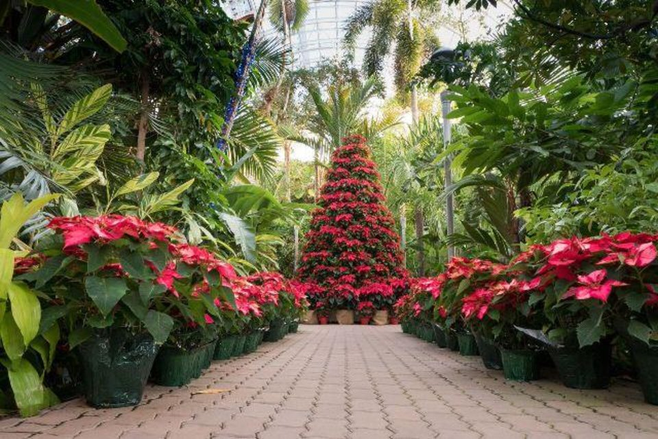 Downtown oklahoma city looking ahead to the holidays and downtown in december news ok for Oklahoma city botanical gardens