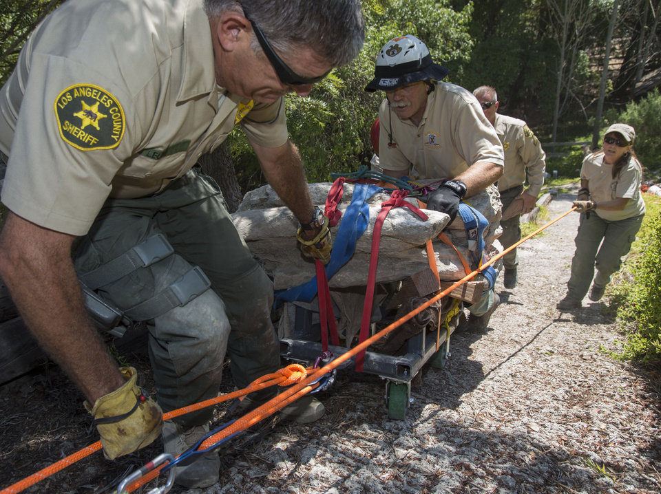 Photo - Members of the Los Angeles Sheriff's Department Search and Rescue team, Mike Leum, left, John McKently, center, and Janet Henderson, right, help to roll a 16-17-million-year-old fossil lodged in a rock weighing about 2,000 pounds up a steep hillside on a customized cart in Rancho Palos Verdes, Calif. on Friday, Aug. 1, 2014. The Palos Verdes Peninsula was once an ocean bottom that over eons has risen hundreds of feet above the Pacific. (AP Photo/Ringo H.W. Chiu)