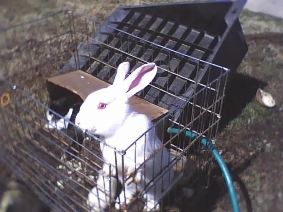 Buggs Bunnie looking for mom<br/><b>Community Photo By:</b> Tama<br/><b>Submitted By:</b> Tama, Midwest