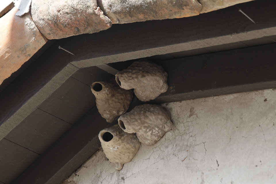 Photo -   Man-made nests hang in the eves at the mission in San Juan Capistrano, Calif., Thursday, April 26, 2012. For most of its 230-year history, the Mission at San Juan Capistrano has been known for the cliff swallows that flock to the crumbling bell tower each spring to nest. In recent decades, however, what used to be swarms of swallows at the original Spanish mission have dwindled. (AP Photo/Chris Carlson)