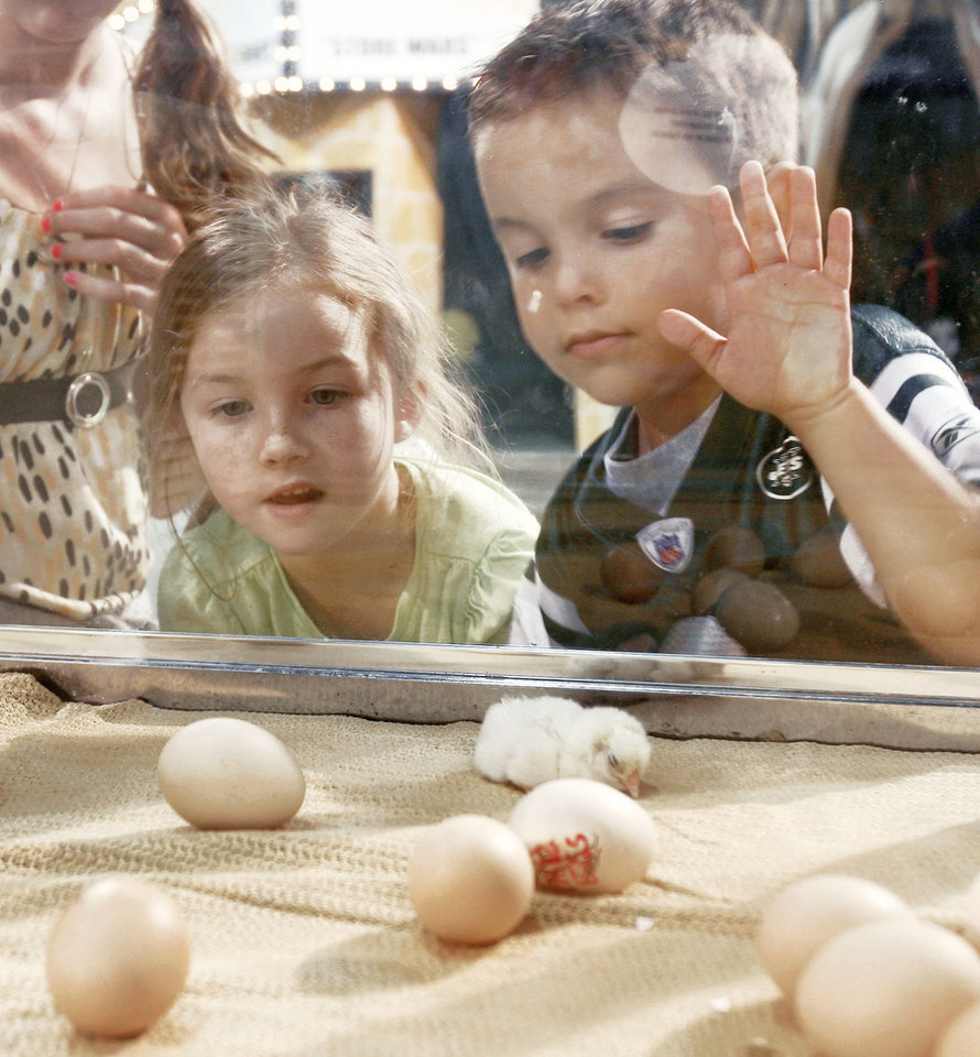 Jordan Wiley, 6, and Gabriel Wiley, 4, watch baby chicks hatch Monday at the state fair.  Photo by Paul Hellstern, The Oklahoman
