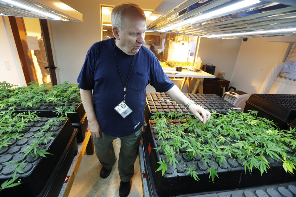 Photo - In this July 1, 2014, photo, Bob Leeds, owner of Sea of Green Farms, a recreational pot grower and processor in Seattle, inspects small