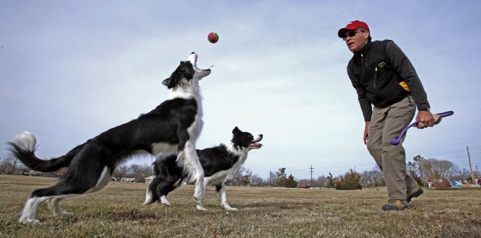 Lester Seat, Norman, exercises his two border collies, Scout, 3, and Kitt, 18 months, as they take advantage of sun and moderate temperatures at Andrews Park on Wednesday, Jan. 18, 2012, in Norman, Okla.  Photo by Steve Sisney, The Oklahoman
