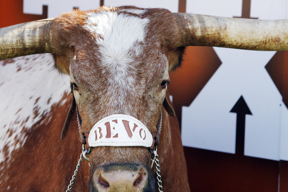 Texas mascot Bevo XIV in the first half during a college football game between the Oklahoma State University Cowboys (OSU) and the University of Texas Longhorns (UT) at Darrell K Royal-Texas Memorial Stadium in Austin, Texas, Saturday, Oct. 15, 2011. Photo by Nate Billings, The Oklahoman