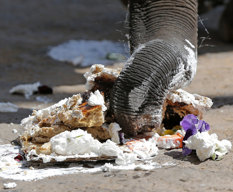 Malee grabs some of her birthday cake during a birthday party for the elephant at the Oklahoma City Zoo. Malee turned 3 on Tuesday. The cake was whole-wheat bread with date filling and whipped cream. Photo by Nate Billings, The Oklahoman  <strong>NATE BILLINGS -   </strong>