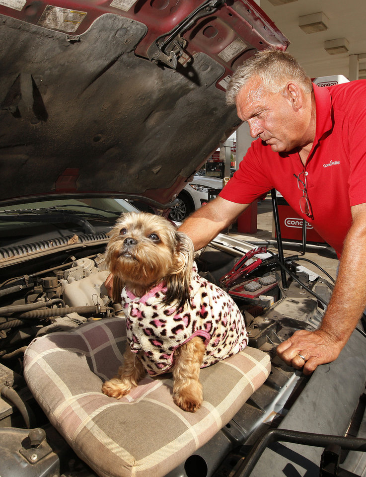 Photo - Sadie, part Shih Tzu and Yorkie, looks fashionable in her leopard print suit as owner Paul Dean works on a car in the service bay of Paul's Conoco in Oklahoma City.  Photo by Paul B. Southerland, The Oklahoman  PAUL B. SOUTHERLAND