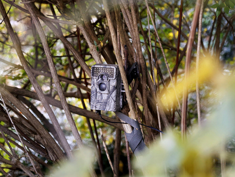 Photo -  This camera is camouflaged by a shrub in John Karlin's front yard. It captures activity on his lawn and along the walkway leading to his porch. [Photo by Jim Beckel, The Oklahoman]