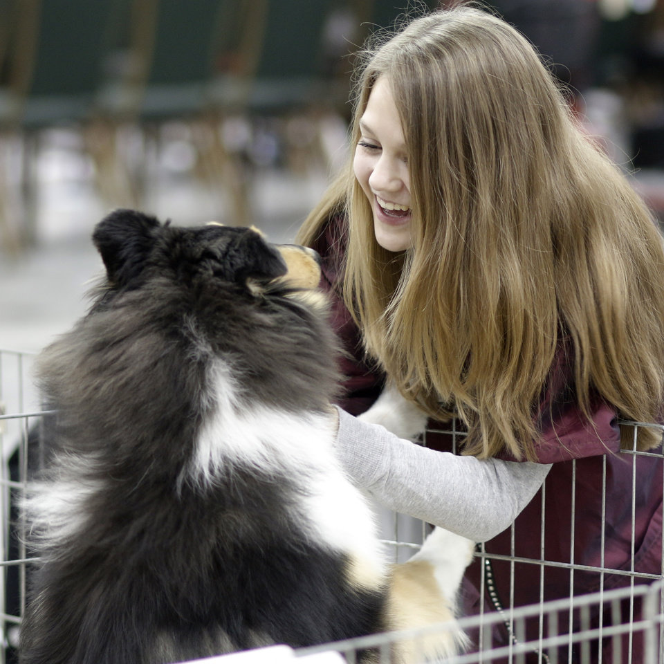 Photo - Caitlin Neeley, 13, from Denver, Colorado, plays with Meaghan, a rough tri-color at the Collie Club of America dog show at the Cox Convention Center in  Oklahoma City, walk their dogs in the Myriad Botanical Gardens, Wednesday, March 11, 2015. Photo by Doug Hoke, The Oklahoman
