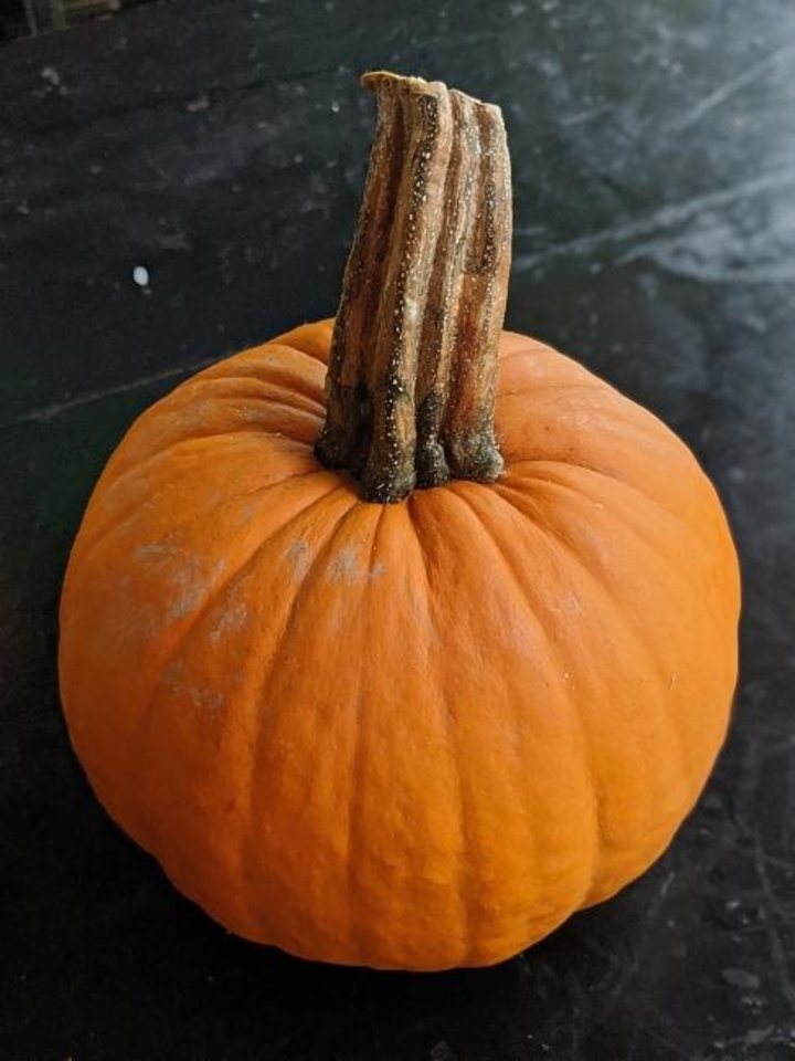 Photo -  Sugar pumpkin has a sweet, creamy flesh that can be baked and pureed for a classic pumpkin pie. [Gretchen McKay/Pittsburgh Post-Gazette/TNS]