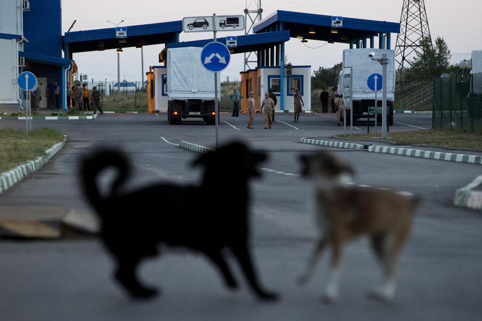 Photo - Dogs play as the Russian aid convoy carrying the first consignment of aid moves to a border control point with Ukraine, in the Russian town of Donetsk, Rostov-on-Don region, Russia, Wednesday, Aug. 20, 2014.  (AP Photo/Pavel Golovkin)