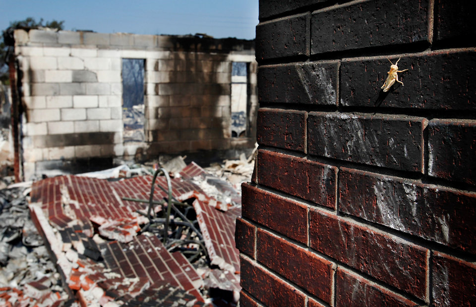 Photo - A grasshopper rests against part of a charred brick wall near the back of the burned Harrison Bethel Baptist Church at NE 71 and St. Bernard  after wildfires ravaged land and property that stretched from NE 50 on the south to Hefner Road on the north.  The fire extended from Sooner Road to Midwest Blvd.    Photo taken Wednesday, Aug. 31, 2011. Photo by Jim Beckel, The Oklahoman