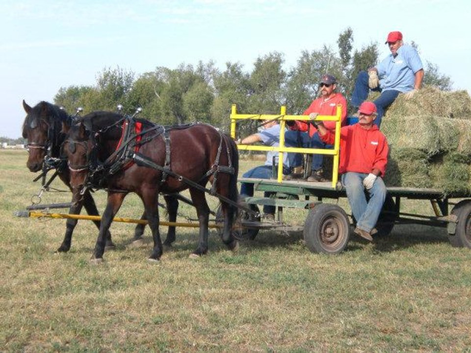 Inmates train wild horses for pulling wagons or carts. These horses pull a trailer of hay baled by inmates for the wild horse herd kept by Hutchinson Correctional Facility for the U.S. Bureau of Land Management. <strong>PROVIDED PHOTO</strong>