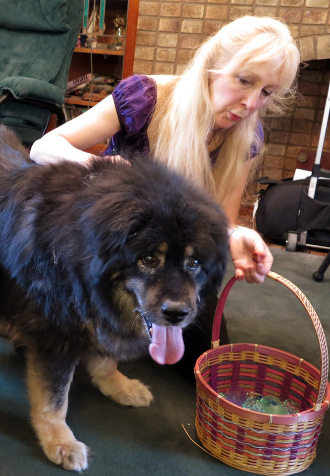 Photo - In this May 22, 2014 photo, Jane Flint poses with Shombu, a Tibetan Mastiff at her Milwaukee home where police shot and killed two of her other Tibetan Mastiffs in 2010 while searching her home for endangered reptiles. Milwaukee police fatally shoot dozens of dogs each year, generally claiming that the animals were a threat to officers or the public, so the department has begun training officers to use less-lethal means or to recognize when dogs' actions are non-threatening. (AP Photo/Dinesh Ramde)
