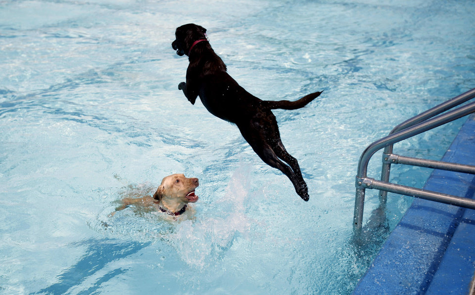 Mousse, right, jumps over Choco owned by Erin McCallister during the Dog Pool Party at Westwood Water Park, Sunday, Aug. 30, 2009, in Norman, Okla. Photo by Sarah Phipps,The Oklahoman