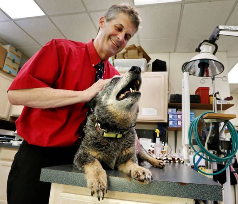 Photo -  Norman Veterinarian Dr. John Otto works with Cody recently at his animal hospital in Norman. [Photo by Steve Sisney, The Oklahoman]