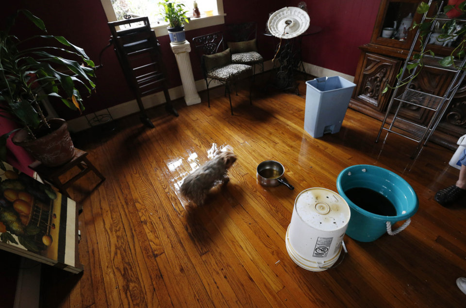 Photo - Pricilla, a terrier dog owned by Dot Peek of Hattiesburg, Miss., walks gingerly around buckets set up to catch rain water from the roof leaks caused by Sunday's tornado, Monday afternoon, Feb. 11, 2013. Peek's home and that of her daughter sustained severe property damage from the tornado, as did many others living in the college town and some surrounding areas. (AP Photo/Rogelio V. Solis)