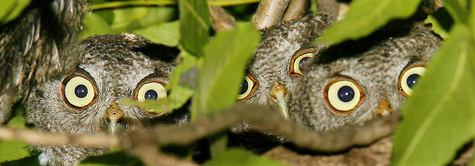 THIRD PLACE-FEATURE