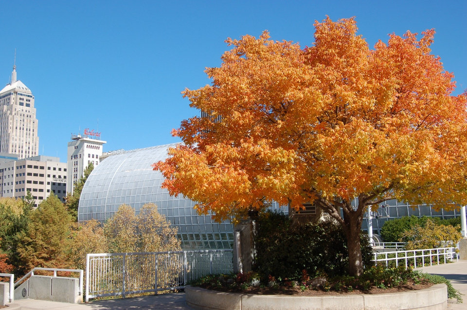 The Crystal Bridge is offering free admission on November 16.<br/><b>Community Photo By:</b> Jenny Coon Peterson<br/><b>Submitted By:</b> Jennifer,
