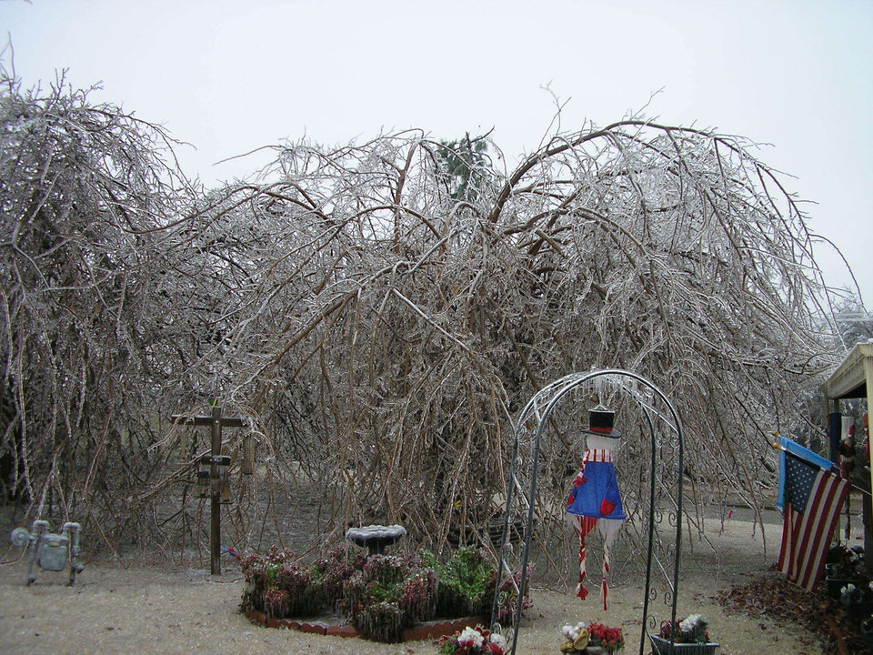 Tree in Front Yard of Nellie And Janet Clubine Home<br/><b>Community Photo By:</b> Janet Clubine<br/><b>Submitted By:</b> Nellie, Midwest City
