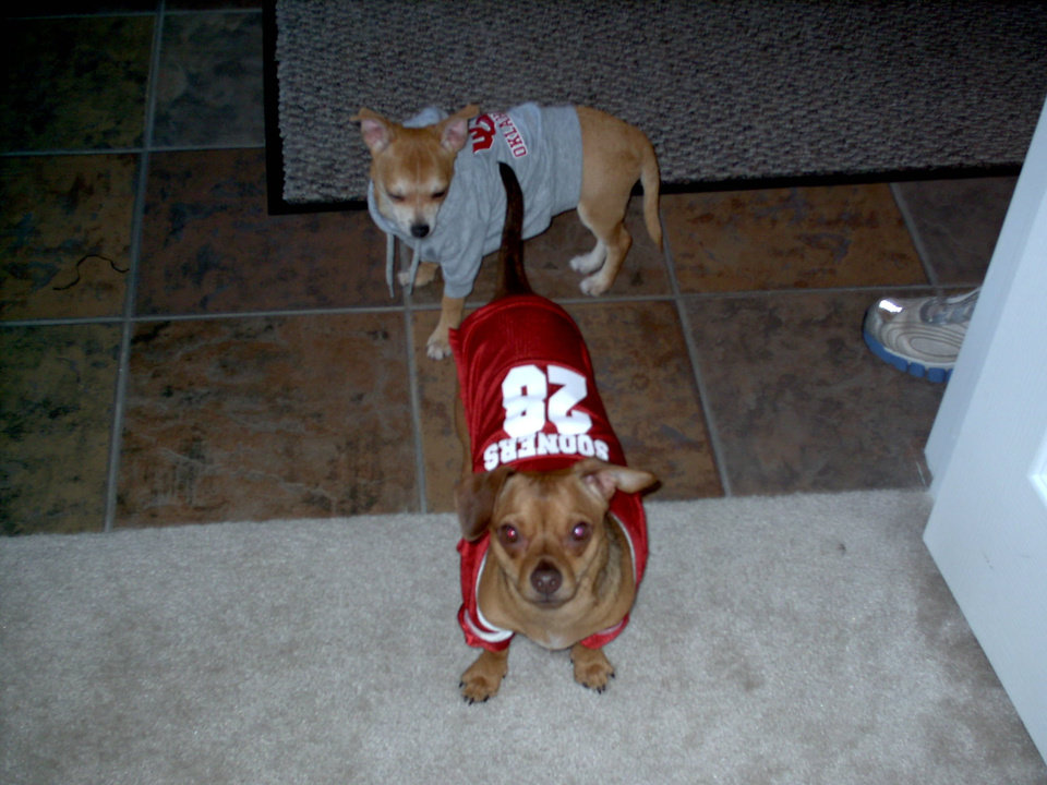 Simba and Kato ready for game day!<br/><b>Community Photo By:</b> Niki Dolney<br/><b>Submitted By:</b> niki, Midwest City