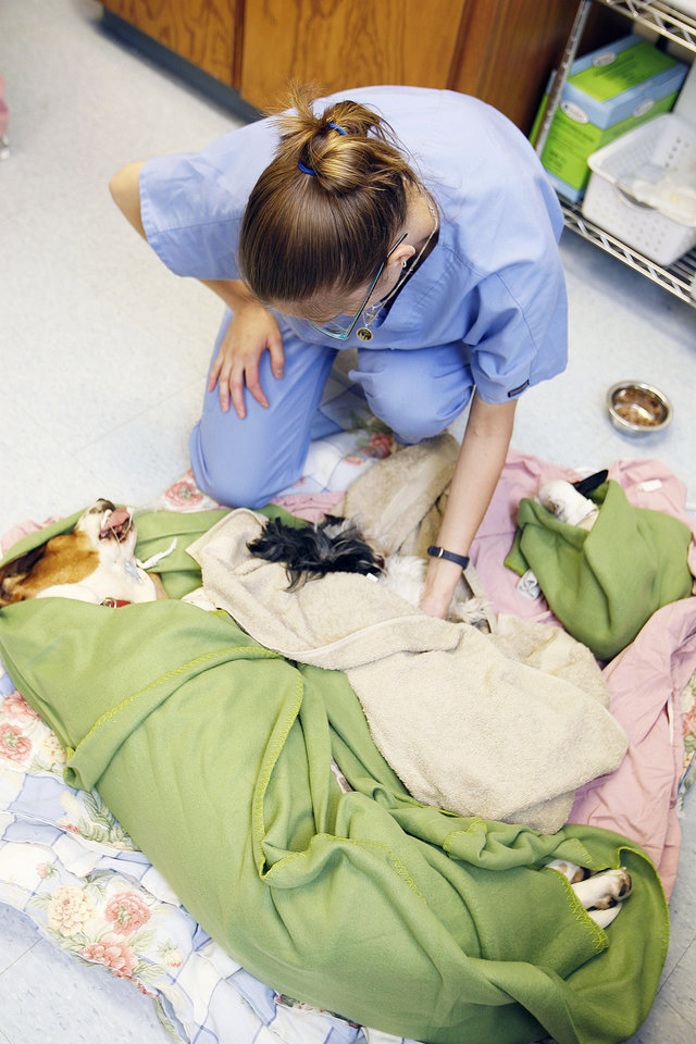 Veterinary assistant Andrea Osisek tends to Ellie, Katie and Hannah after their operations at the new OK  Humane Place Spay/Neuter Clinic.  PHOTO BY PAUL HELLSTERN, THE OKLAHOMAN