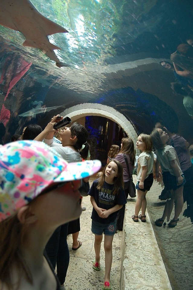 Photo - A 40-foot tunnel in the Dallas World Aquarium features sharks, rays and sawfish.  Photo by Annette Price, for The Oklahoman.