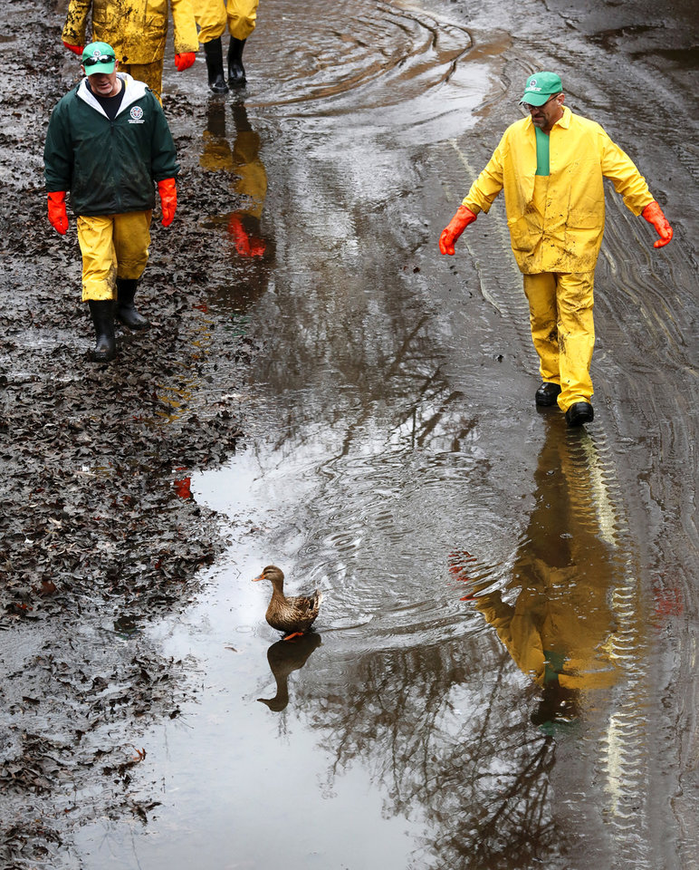 Photo -  City crews are accompanied by a duck as they survey the Bricktown Canal after it had been drained. [Photo by Jim Beckel, The Oklahoman]