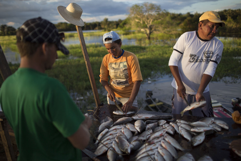 """Photo - In this May 18, 2014 photo, vendors prepare fish to sell on a roadside near Manaus, Brazil. Manaus, a World Cup host city, got its start as a Portuguese fort, founded in the late 17th century on the spot where the Rio Negro and the Solmioes River meet to form the immense Amazon, the planet's largest river by volume. Water is a way of life for the """"ribeirinhos,"""" as the river dwellers are known in Portuguese. (AP Photo/Felipe Dana)"""