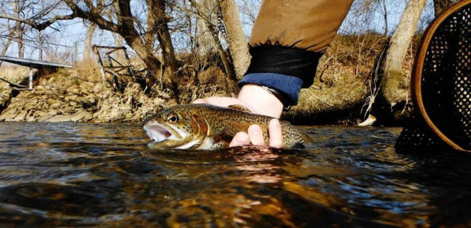 Photo -  Oklahoma's winter trout areas are now open with the exception of Perry CCC Lake and Medicine Creek. The water temperatures are still too warm in those areas to stock trout.