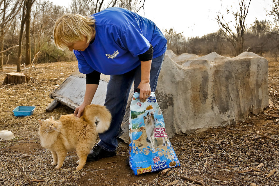 Photo - Above:  Jay Cook, who runs the nonprofit Kitty Wranglers, feeds and gives water on Jan. 28 to the feral cats that live around Lake Hefner in Oklahoma City.  CHRIS LANDSBERGER -