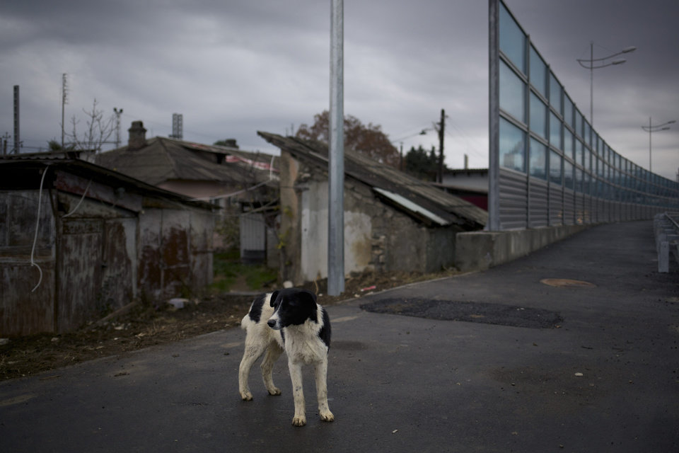 Photo - In this photo taken on Wednesday, Nov., 27, 2013, a dog walks on the pavement separating a federal house and the 5a Akatsiy street's house in the village of Vesyoloye outside Sochi, Russia. As the Winter Games are getting closer, many Sochi residents are complaining that their living conditions only got worse and that authorities are deaf to their grievances. (AP Photo/Alexander Zemlianichenko)