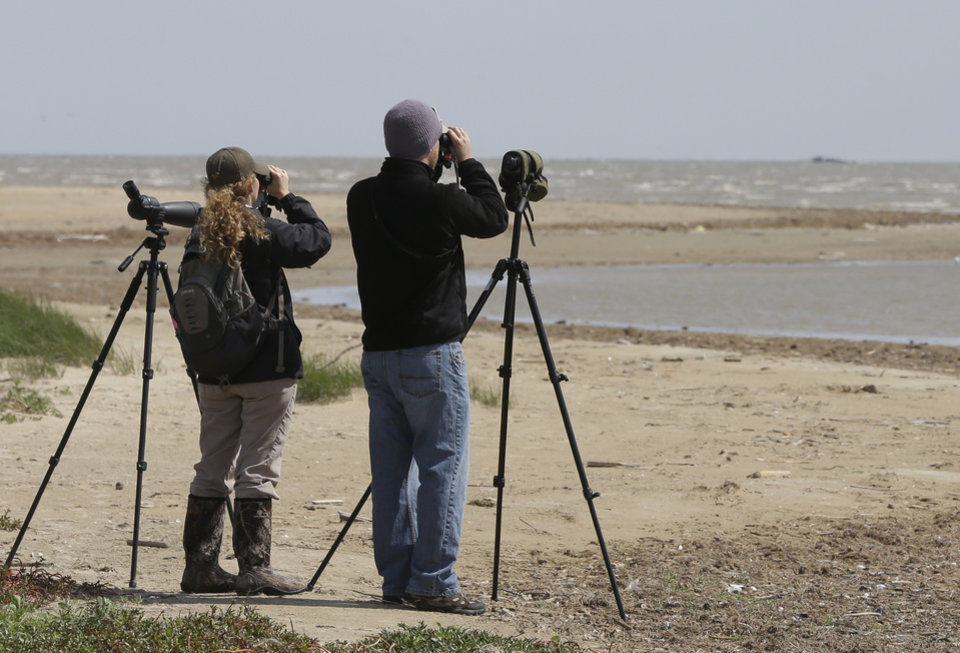 Photo - Shore bird conservationists Pete Deichmann, right, and Kristen Vale look for birds with oil on them at the Bolivar Flats Bird Sanctuary Tuesday, March 25, 2014, in Bolivar, Texas. Environmental groups are trying to protect tens of thousands of wintering birds who make their home along the bay at this time of year. Up to 170,000 gallons of tar-like oil spilled into the major U.S. shipping channel after a barge ran into a ship Saturday. (AP Photo/Pat Sullivan)