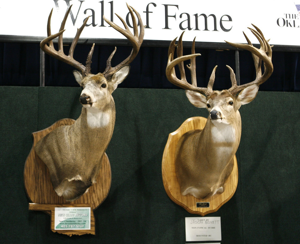 Photo -  These are two potential state record deer on display at the Oklahoma Backwoods Hunting and Fishing Expo at State Fair Park in Oklahoma City, OK, Friday, Feb. 29, 2008. BY PAUL HELLSTERN, THE OKLAHOMAN ORG XMIT: KOD