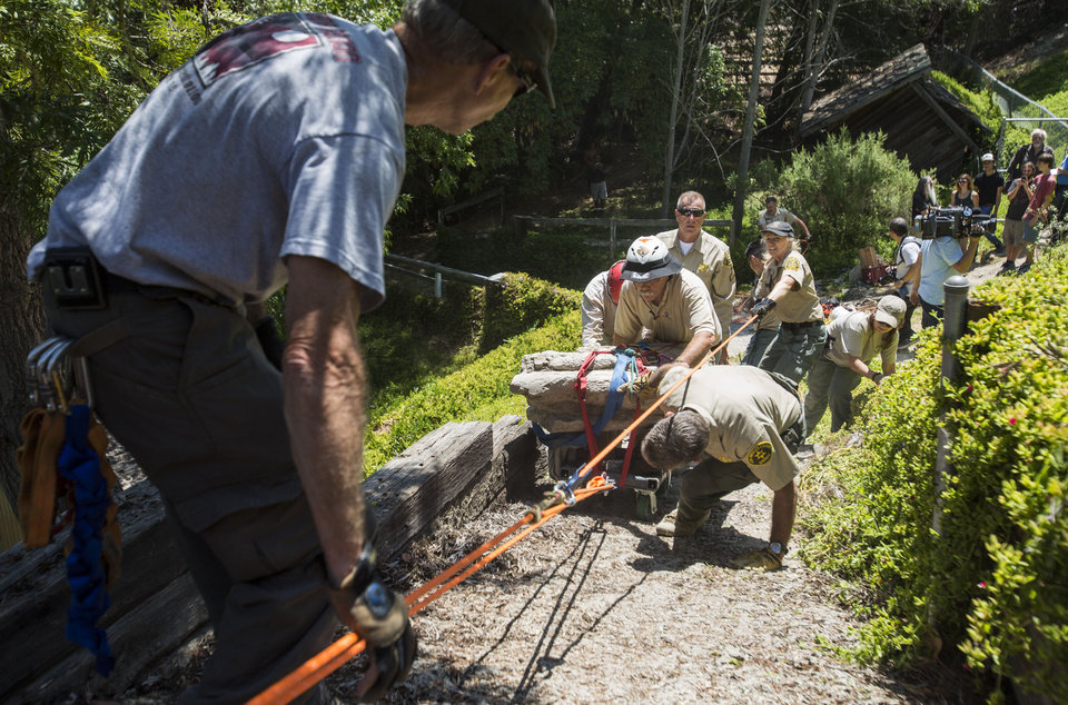 Photo - Members of the Los Angeles Sheriff's Department Search and Rescue team roll a 16-17-million-year-old fossil lodged in a rock weighing about 2,000 pounds up a steep hillside on a customized cart in Rancho Palos Verdes, Calif. on Friday, Aug. 1, 2014. The Palos Verdes Peninsula was once an ocean bottom that over eons has risen hundreds of feet above the Pacific. (AP Photo/Ringo H.W. Chiu)