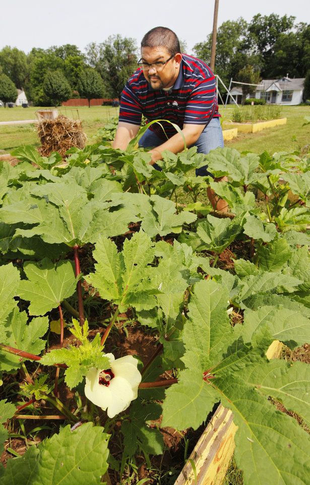 Photo -  Tony Mullican, student and community minister at Portland Avenue Baptist Church, 1301 N Portland, plucks okra from the church's community garden. Photo by Paul B. Southerland, The Oklahoman   PAUL B. SOUTHERLAND -