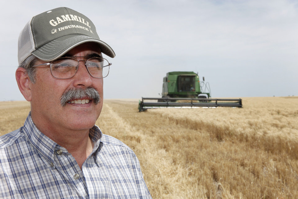 Photo - David Gammill is shown in a wheat field near Faxon as his son Josh runs the combine behind him.   David McDaniel - The Oklahoman