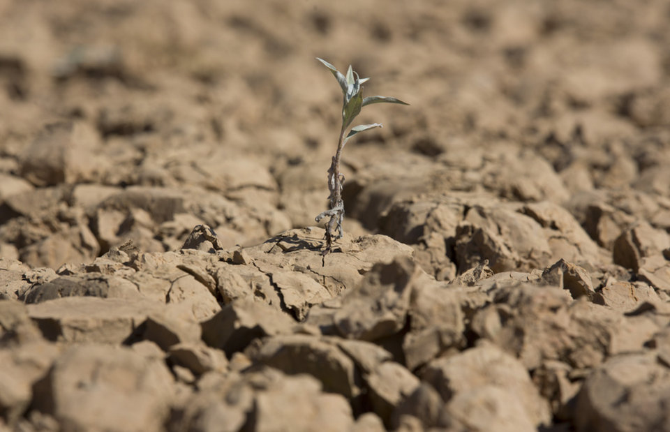 Photo - In this May 14, 2014 photo, a lone plant has sprouted through a piece of parched, cracked earth in the Jaguari dam, which is part of the Cantareira System, responsible for providing water to the Sao Paulo metropolitan area, in Braganca Paulista, Brazil. The worst drought in more than 80 years is hitting Sao Paulo, Brazil's largest city just as it prepares for the tens of thousands of foreigners expected at the tournament opener. (AP Photo/Andre Penner)