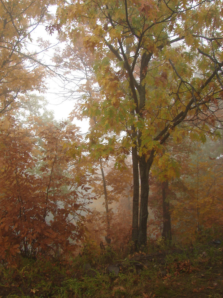 Doesn't this look like a painting? The lighting is just GORGEOUS after a rainfall on Talemena Drive...Nov. 2006.  No alterations whatsoever...God made this!  :-)<br/><b>Community Photo By:</b> Victoria Jimenez<br/><b>Submitted By:</b> Victoria, Harrah