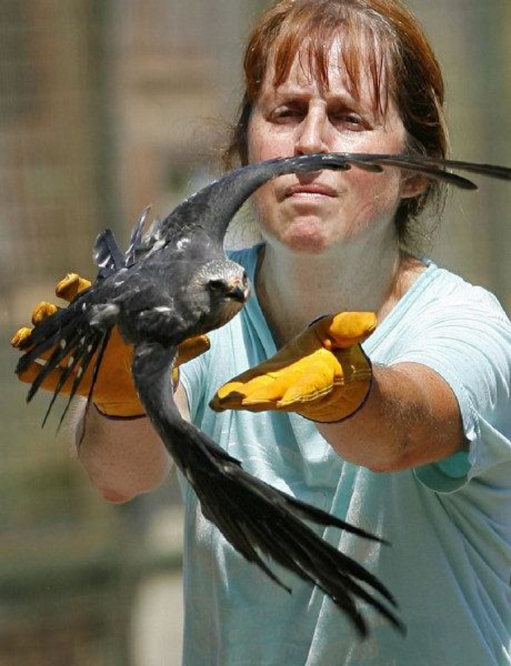 Kristy Wicker releases a recovered Mississippi Kites at WildCare on Thursday, August 25, 2011, in Noble, Okla.   Photo by Steve Sisney, The Oklahoman ORG XMIT: KOD