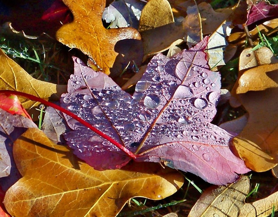 Dew on fall leaves<br/><b>Community Photo By:</b> Cindi Tennison<br/><b>Submitted By:</b> Cindi , Bethany